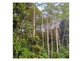 Pohon sengon